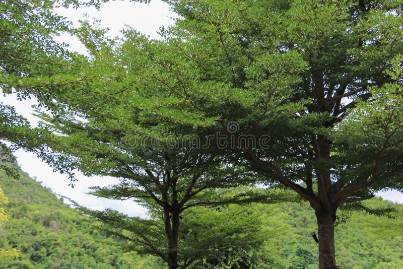 背景森林本质木雪的结构树 自然绿色木头 库存照片