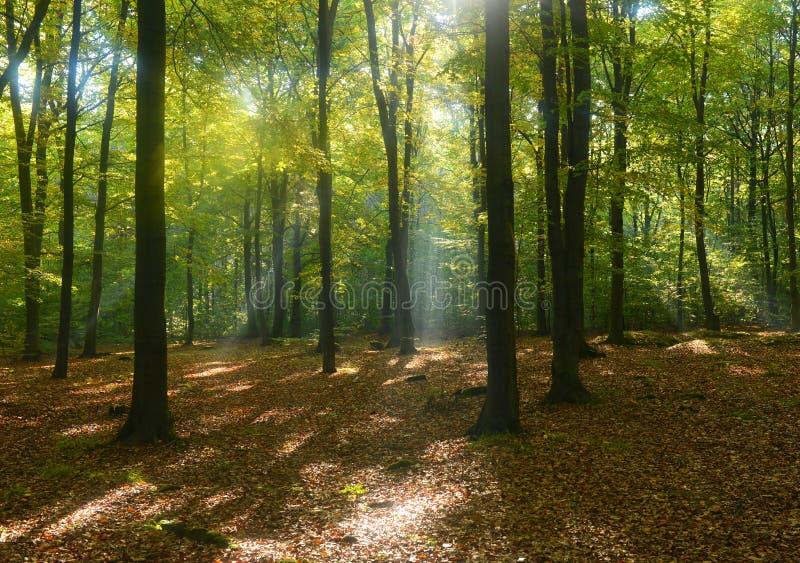 背景森林本质木雪的结构树 库存照片