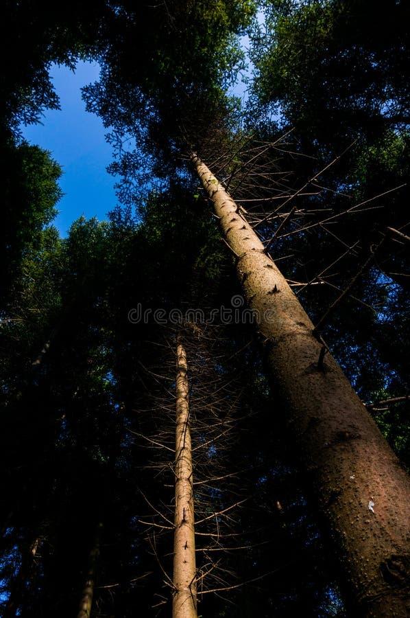 背景森林本质木雪的结构树 免版税图库摄影