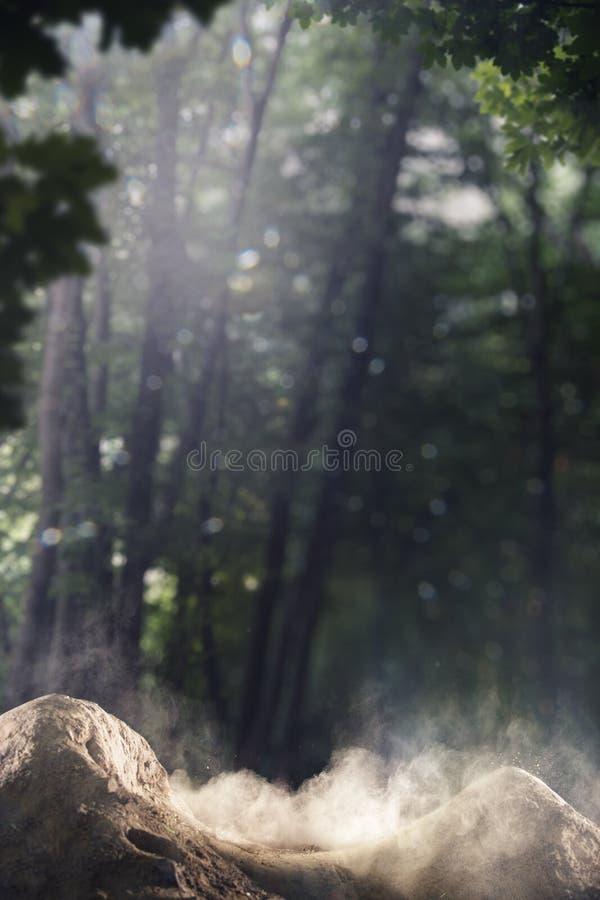 背景森林轨道土自行车 库存图片