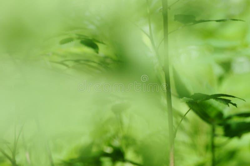 背景森林 库存照片