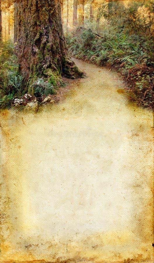 背景森林grunge路 免版税库存图片