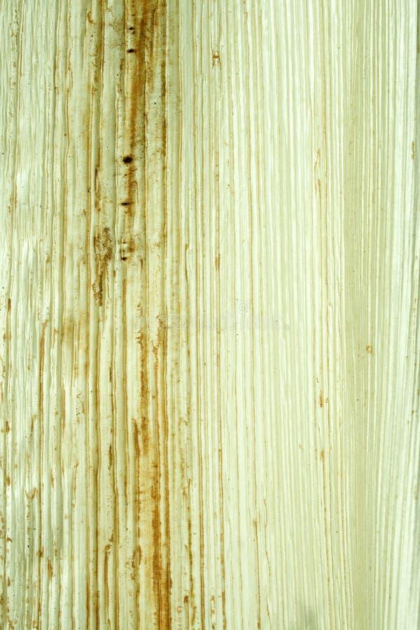 背景椰子被排行的自然纸白色 免版税图库摄影
