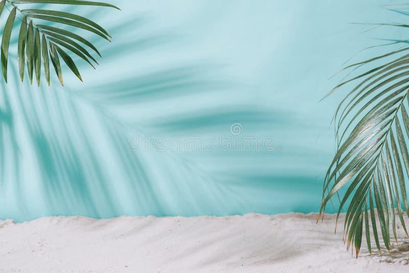 背景概念框架沙子贝壳夏天 在蓝色背景的棕榈树阴影 免版税图库摄影
