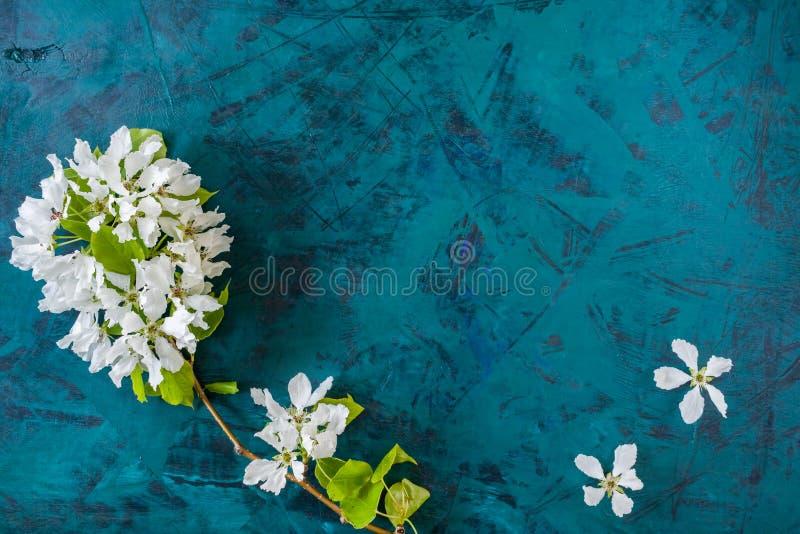 背景概念花春天空白黄色年轻人 白色苹果树分支和花在时髦翡翠绿背景的 免版税库存图片