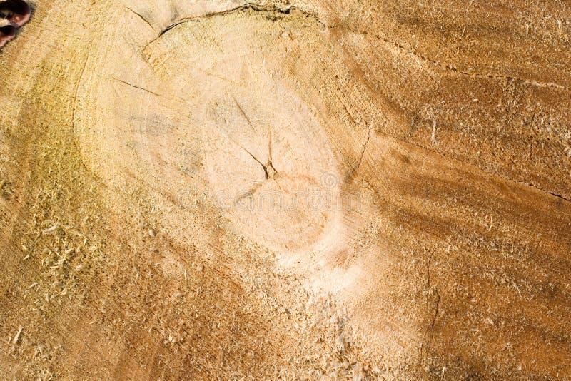 背景横剖面木的树干 库存照片