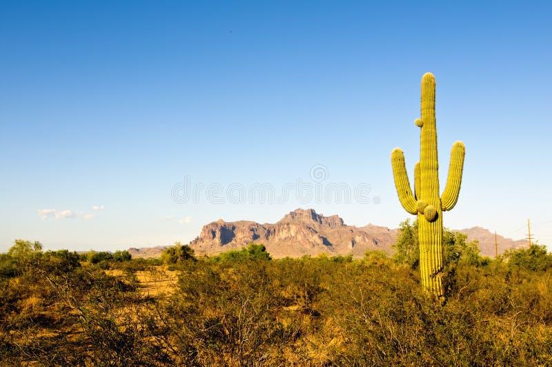 背景沙漠横向山 免版税库存图片