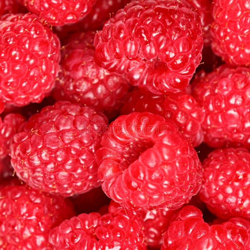背景浆果莓纹理 库存照片