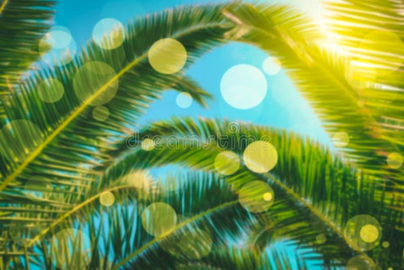 背景热带的棕榈树 库存例证