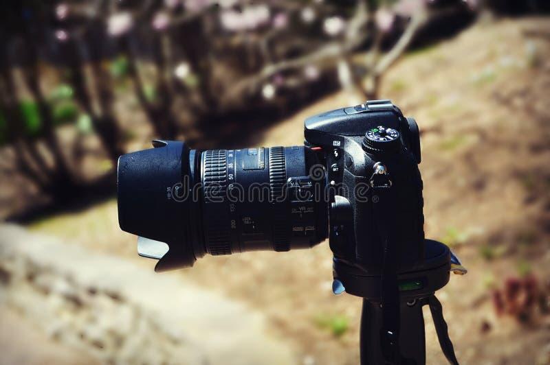 背景照相机剪报dslr查出的路径白色 库存照片