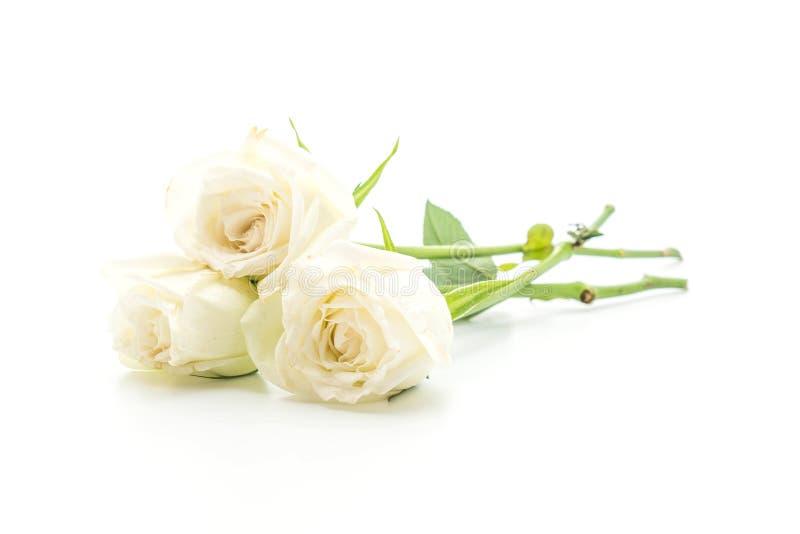 背景特写镜头玫瑰白色 库存图片