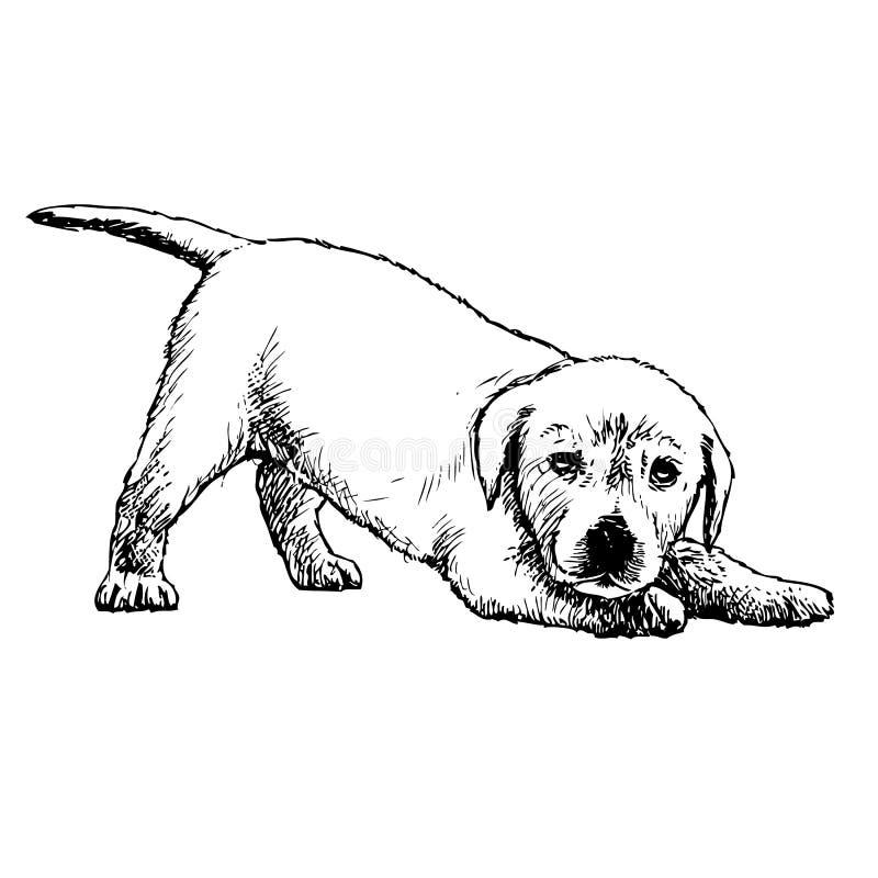 背景狗灰色拉布拉多小狗后方猎犬查阅 库存例证