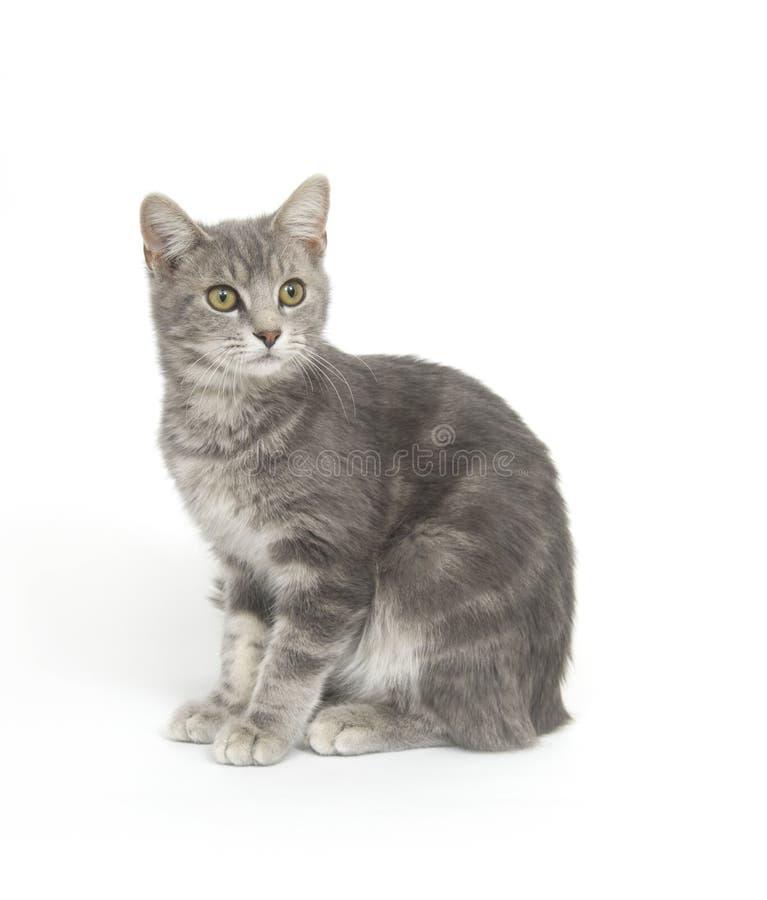 Download 背景猫灰色白色 库存照片. 图片 包括有 逗人喜爱, 搜索, 作用, 其它, 爱拥抱, 全部赌注, 好奇, 小猫 - 3666740