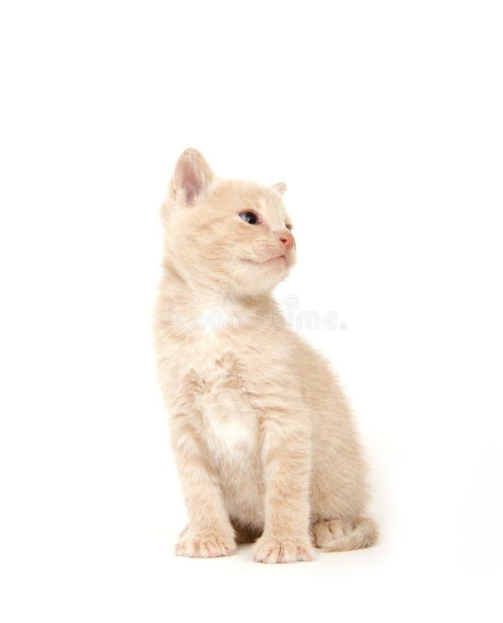 背景猫空白黄色 免版税库存图片