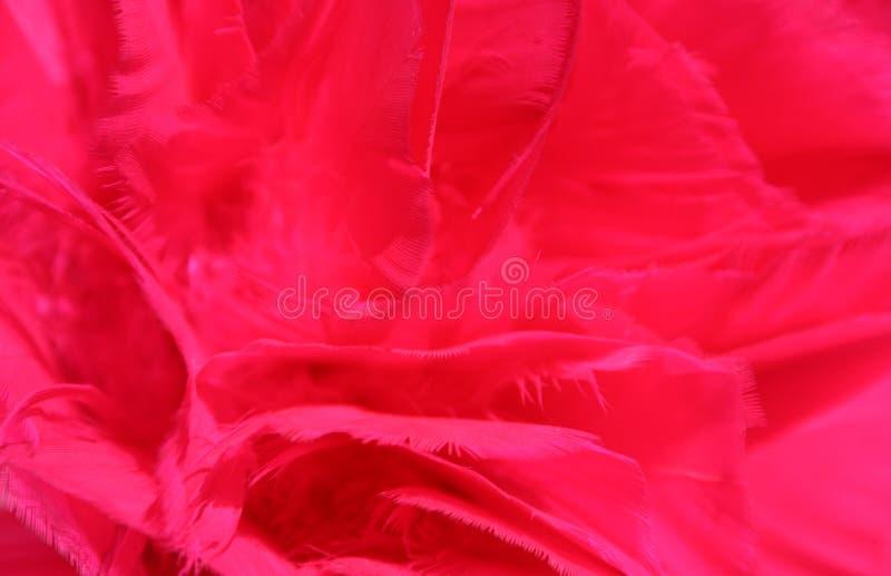 背景用羽毛装饰红色 免版税库存照片