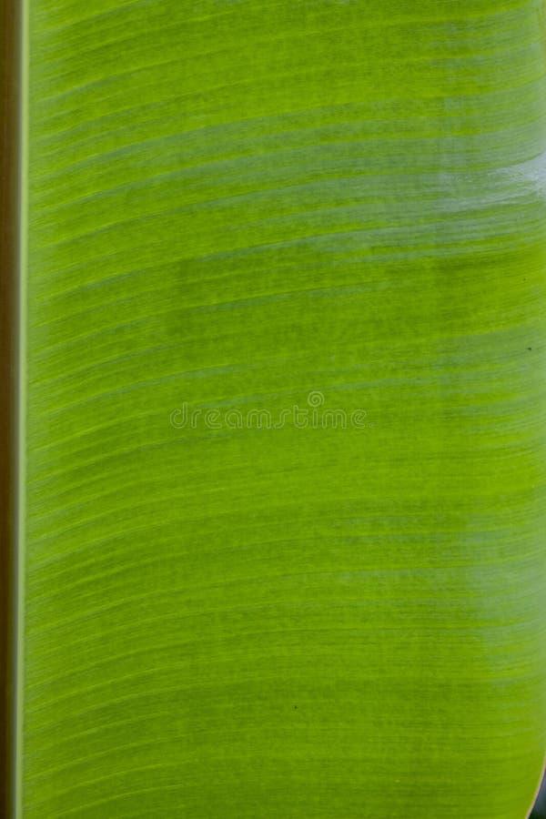 背景的半香蕉叶子样式 免版税图库摄影