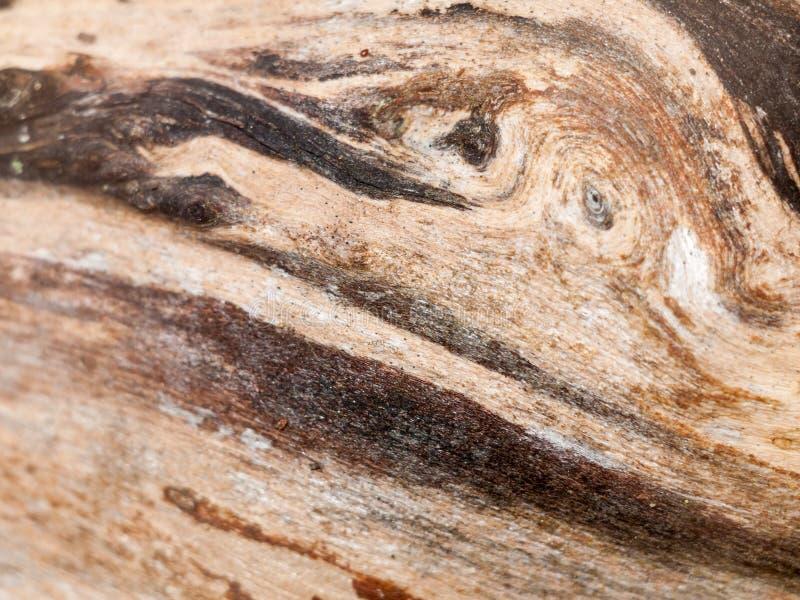 背景的有趣的被剥离的干木纹理关闭 免版税库存照片