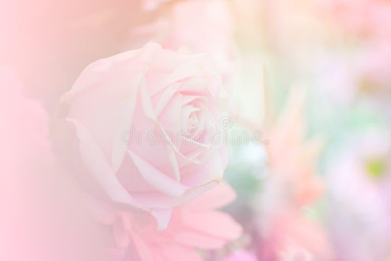背景的桃红色玫瑰软的焦点 免版税库存图片