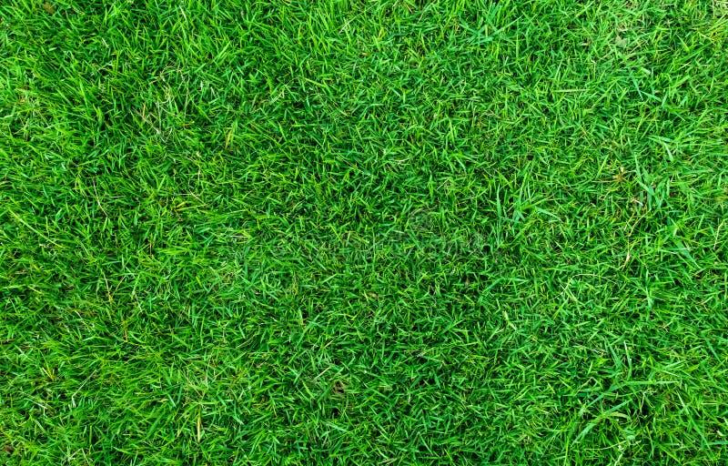 背景的绿草纹理 绿色草坪样式和纹理背景 特写镜头 库存照片