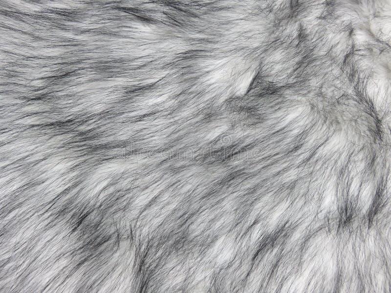 背景的自然浅灰色的貂皮毛皮纹理特写镜头 库存图片