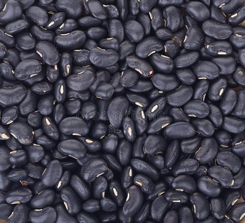背景的黑眼豆豆 免版税库存照片