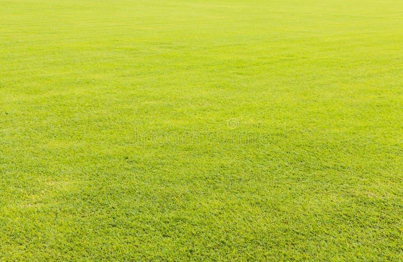 背景的绿草草坪 库存图片