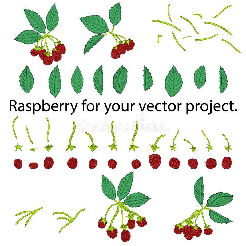 背景空白查出的莓 您的传染媒介项目的分开的元素 向量例证