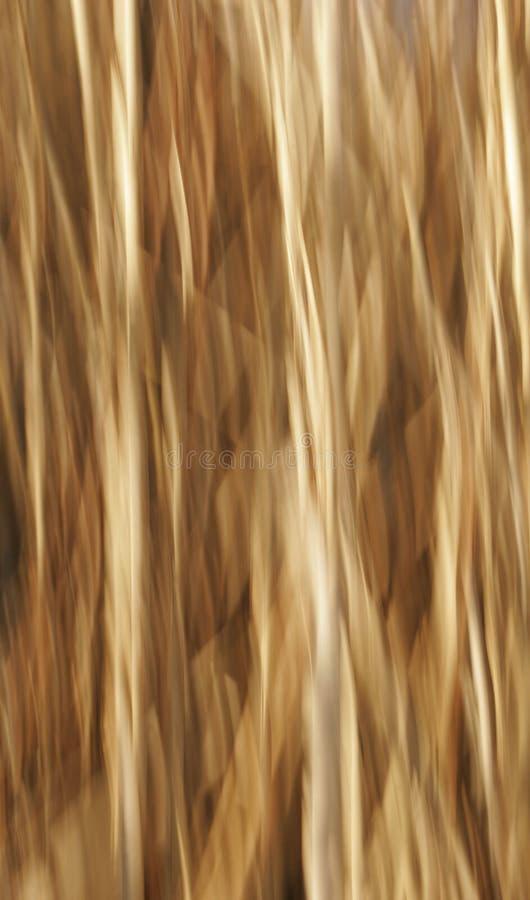 背景米黄迷离本质 免版税库存图片