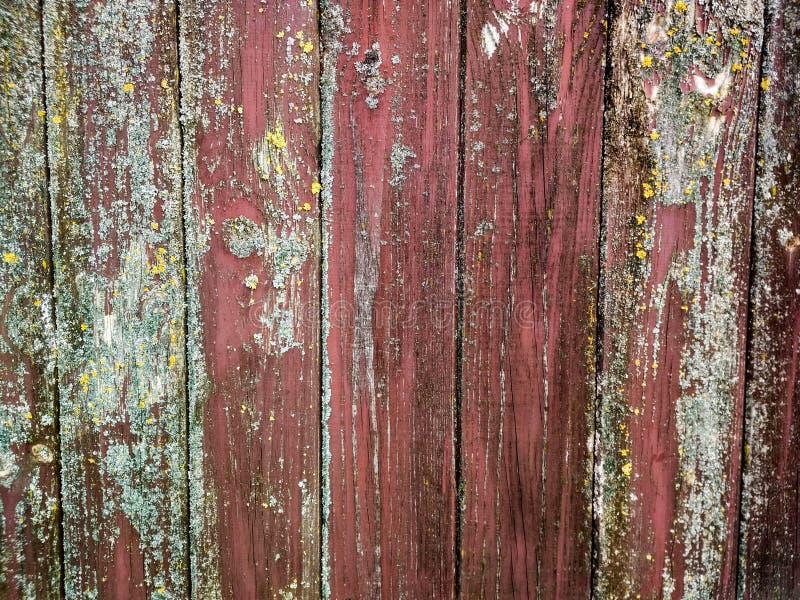 背景粗砺的木头 免版税库存图片