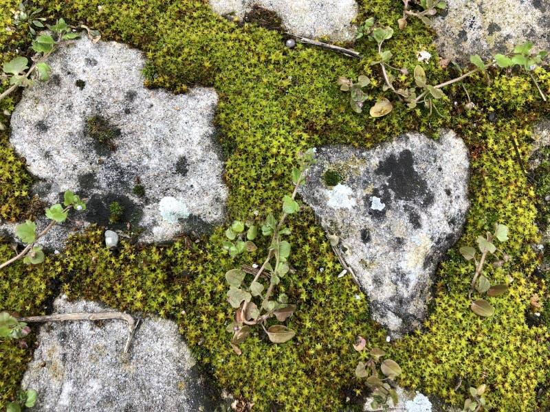 背景结构是石头和青苔02的组合 免版税库存图片