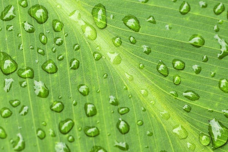 背景绿色叶子雨珠 免版税库存图片