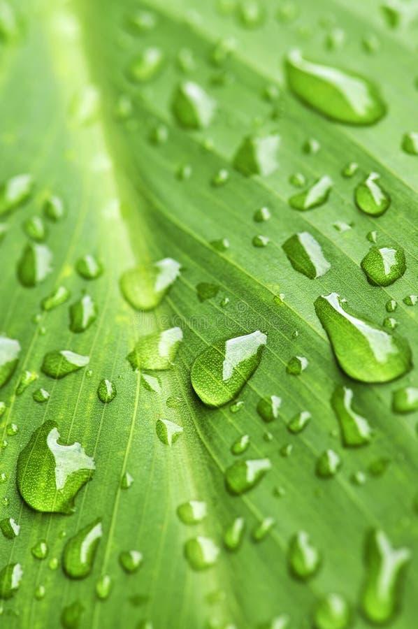 背景绿色叶子雨珠 免版税库存照片