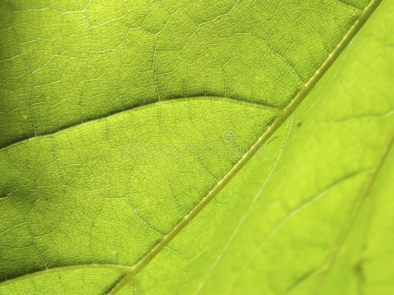 背景绿色叶子 库存照片