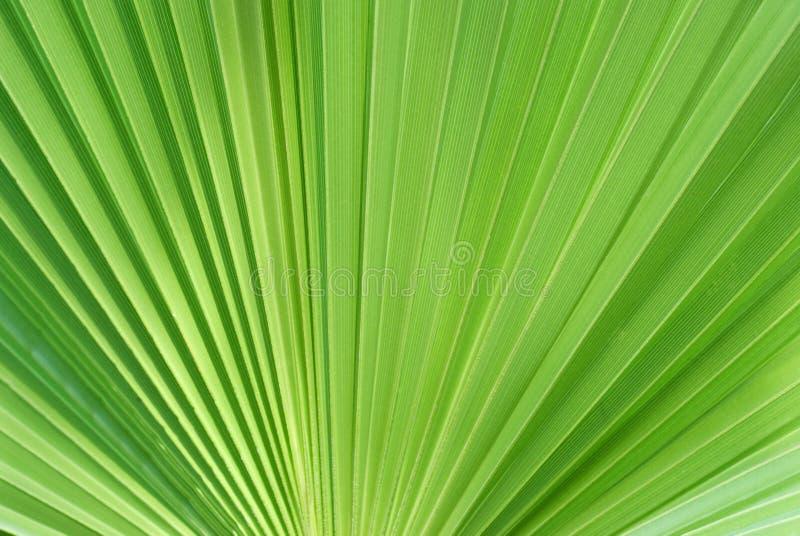 背景绿色叶子 免版税图库摄影
