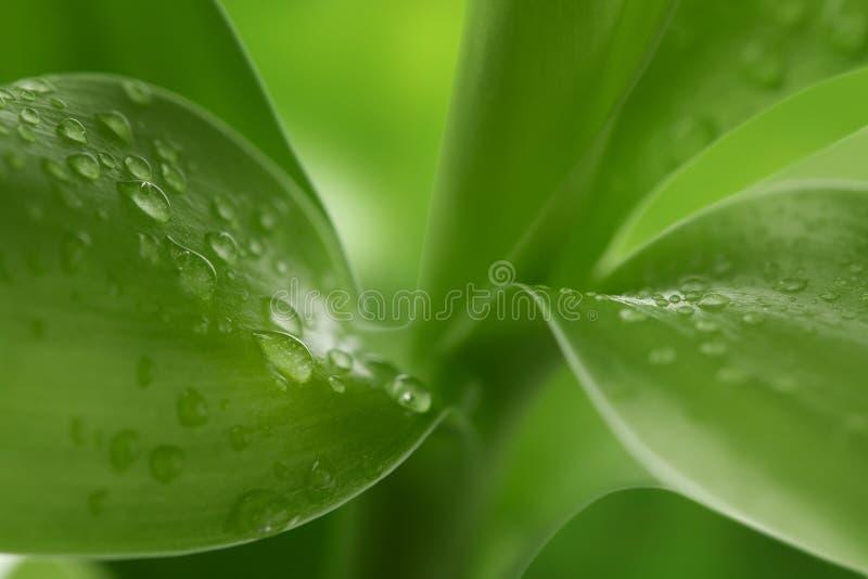 背景绿色本质 库存照片