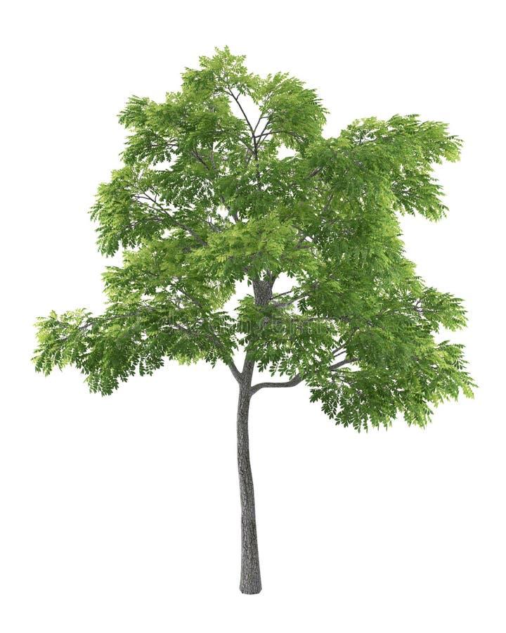 背景绿色查出结构树白色 皇族释放例证