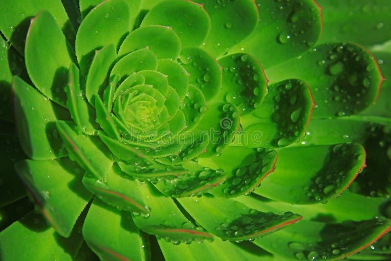 背景绿色瓣照片 库存照片