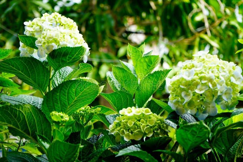 背景绿色结构树 图库摄影