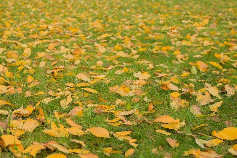 背景绿色黄色 黄色叶子秋天背景 库存图片