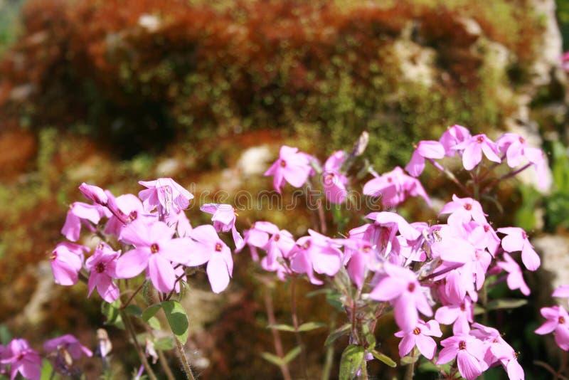 背景美丽的刀片花园 图库摄影