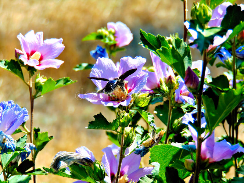 背景美丽的刀片花园 免版税库存图片