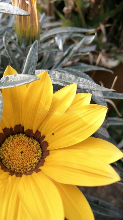 背景美丽的花 库存照片