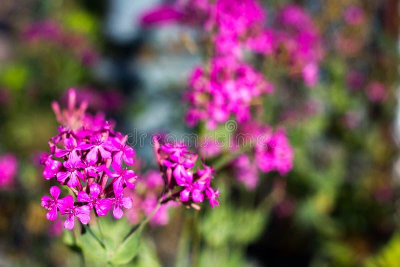 背景美丽的花 库存图片