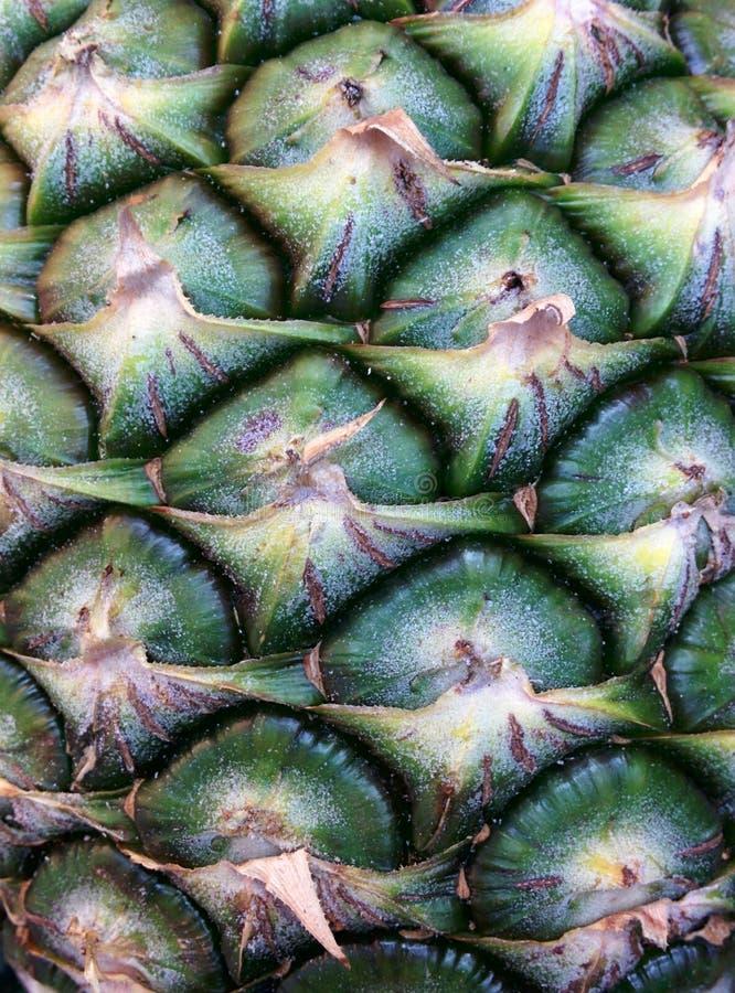 背景美好的自然菠萝纹理 库存图片
