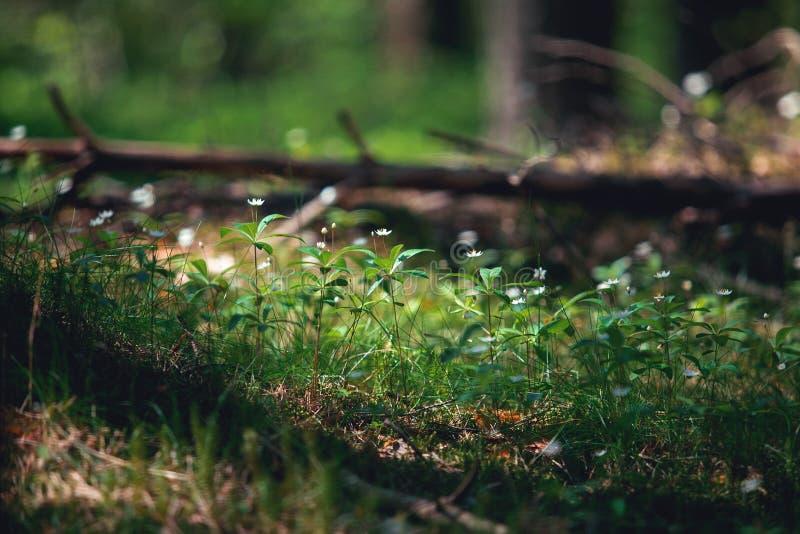 背景美好的花森林例证光 免版税库存图片