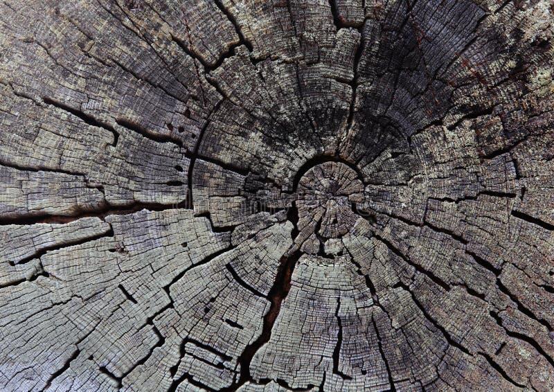 背景老树桩结构树 与圆环和镇压的质感粗糙的表面 免版税库存图片