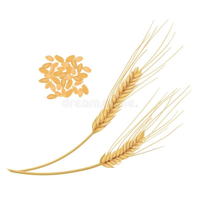 背景耳朵查出麦子白色 金黄钉和五谷 皇族释放例证