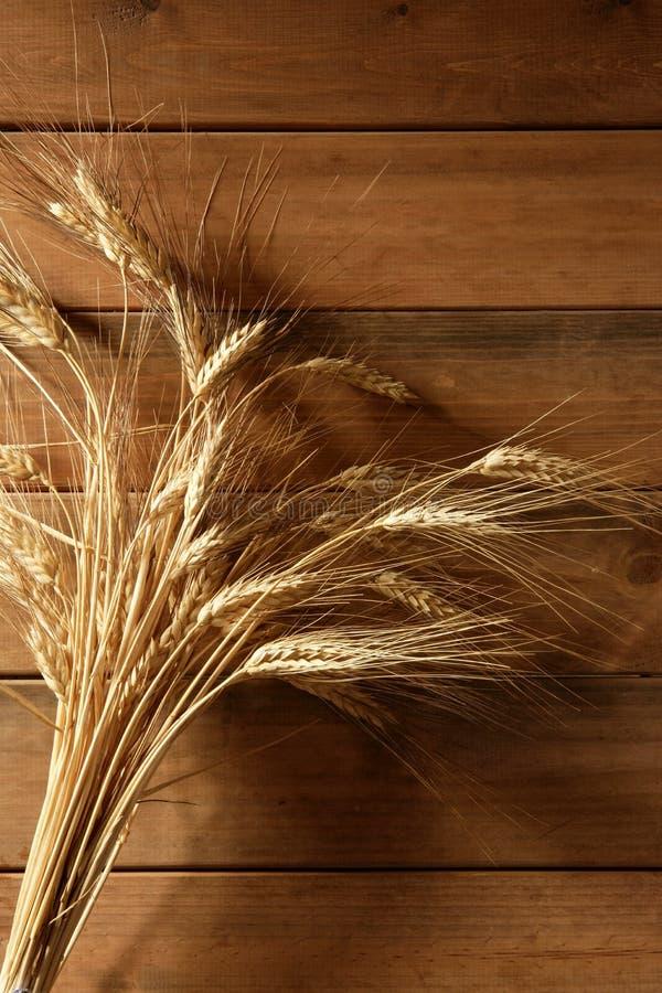 背景耳朵金黄在木峰值的麦子 免版税图库摄影