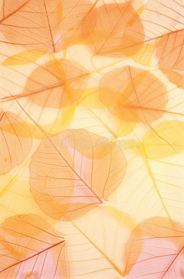 背景色的干燥叶子 免版税库存照片