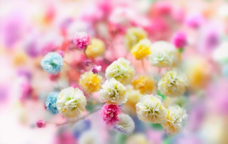 背景花卉春天夏天 开花的五颜六色的小花 库存图片